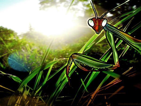 Mantis // 40 x 23 cm // digital composition // 2011 // 6104 views