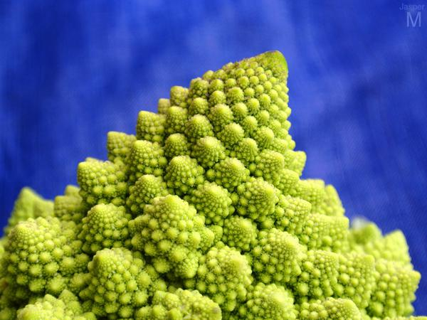 Romanesco // 75 x 50 cm // photo // 2013 // 3595 views